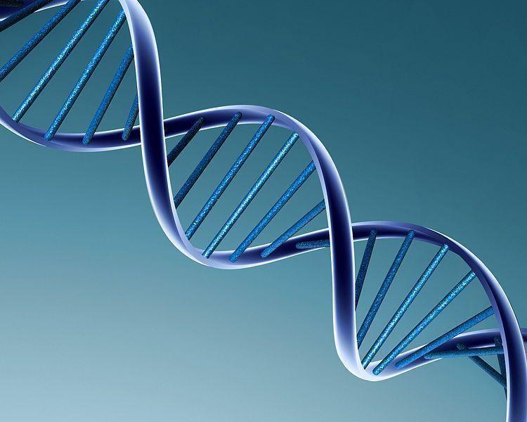ADN misterioso (I): El libro de la naturaleza