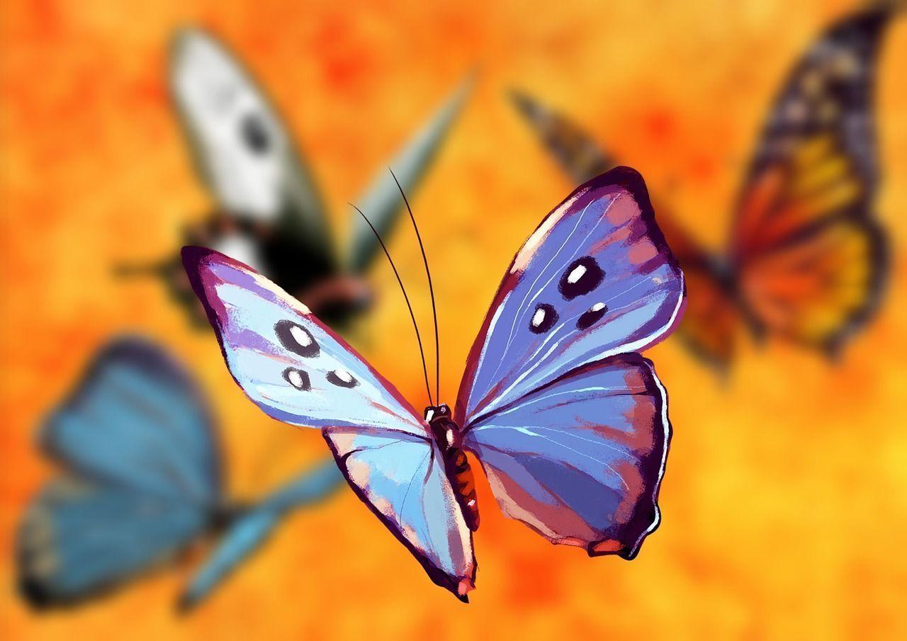 el poder de las mariposas