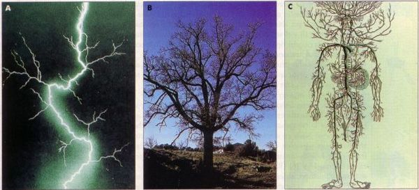 Tres fractales, tres muestras de autosemejanzas: La foto A es un rayo, la B un árbol y la C, el sistema circulatorio humano en un dibujo antiguo.